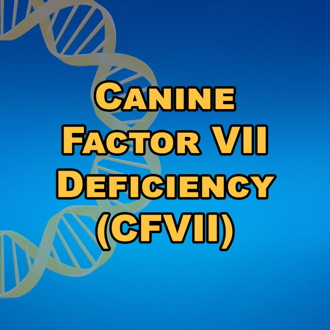Canine Factor VII Deficiency (CFVII)