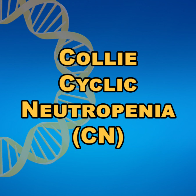 Collie Cyclic Neutropenia (CN)