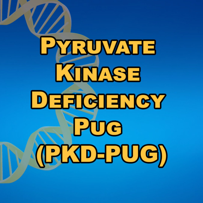 Pyruvate Kinase Deficiency Pug (PKD-PUG)