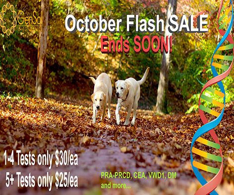 October Flash Sale Ends TONIGHT!
