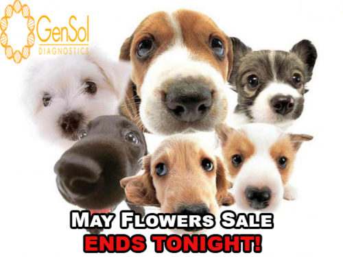 GenSol's May Flowers SALE ENDS TONIGHT!