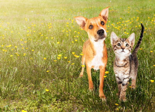 Controlling Fleas and Ticks in the Yard