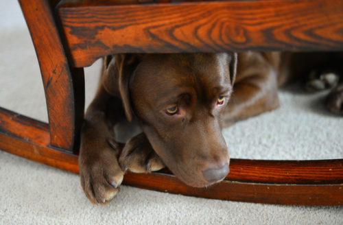 8 Surprising Signs of Anxiety in Dogs