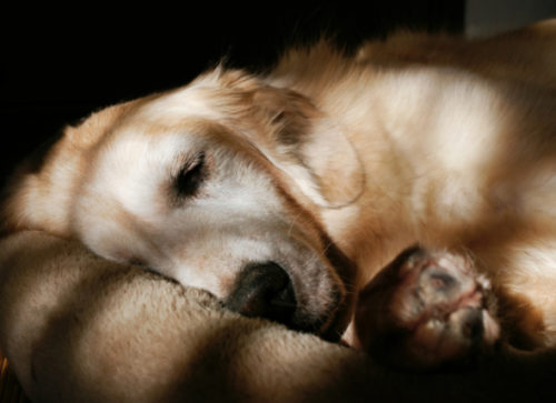 Pet Hospice: Why You Should Consider It