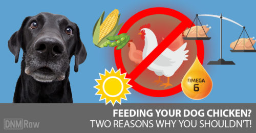 Recent Posts Is Your Dog Getting Enough Sunlight? How To Repair Vaccine Damage With Chinese Medicine Raw Dog Food Safety: Avoid This Common Mistake Transition Your Dog To Raw: 5 Herbs That Help Raw Chicken For Dogs: Why I Stopped Feeding It 5 Unexpected Dangers In Vaccines Raw Chicken For Dogs: Why I Stopped Feeding It
