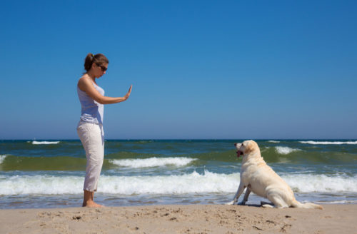 Obedience Training for Dogs: 4 Easy Cues to Master