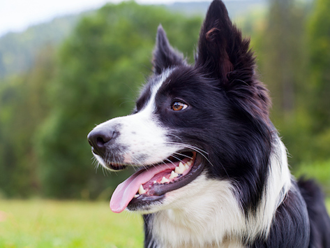 Who Is My Dog? Benefits of Dog DNA Testing