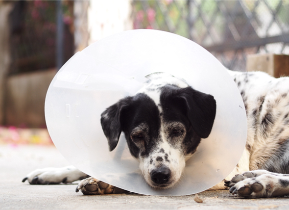How to Care for Your Pet After Surgery