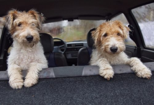 10 Car Safety Items for Your Pet