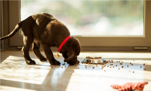 What Causes a Puppy to Stop Growing?