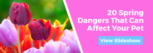 20 Spring Dangers That Can Affect Your Pet