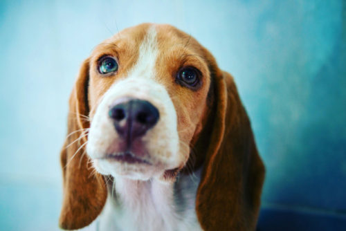 Health Buzz: Here's Your Ultimate Guide to the Dog Flu