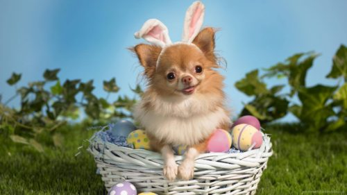 15 Dogs Who Think They're The Easter Bunny