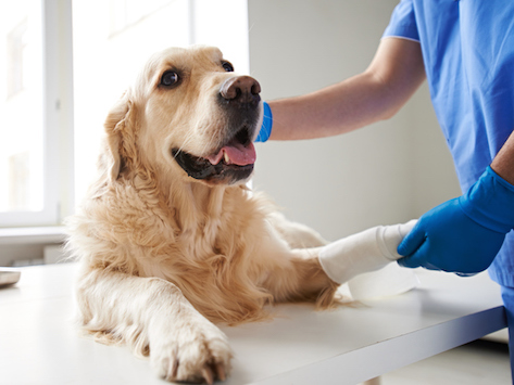 Bone Problems That Can Affect Your Pet