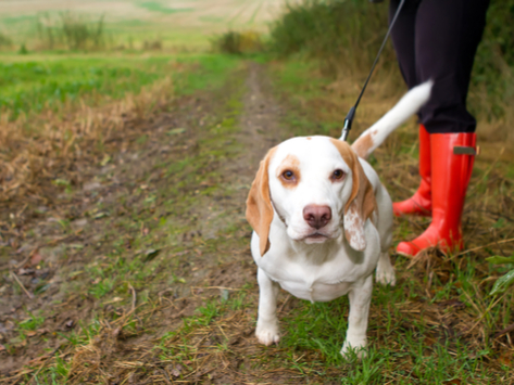 Is Exercise Safe for Pets with Cancer?
