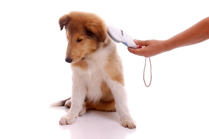 It's National Chip Your Pet Month: Here's How and Why You Should Do It