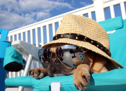 Summer Animal Safety Tips for Beating the Heat