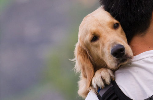 9 Human Medications That Are Safe for Sick Pets