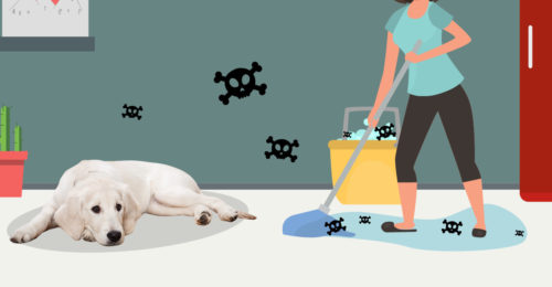 Could Your Cleaning Supplies Be Killing Your Dog? (+ 4 Pet Safe Cleaners)