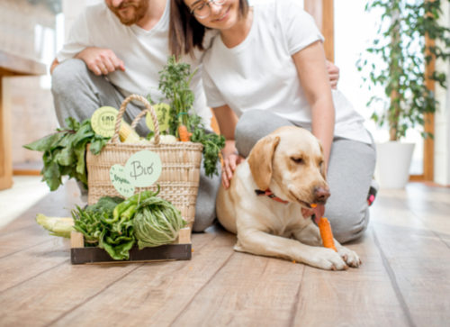 Can Dogs Thrive on a Vegan Diet?
