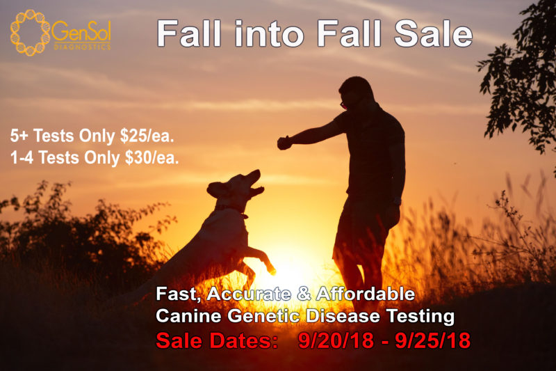 Fall into Fall Sale – Don't Miss Out!