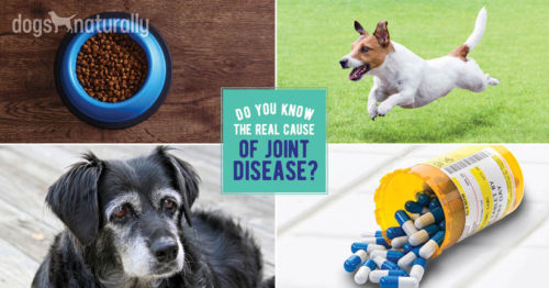 Joint Pain In Dogs: What's Really Causing It?
