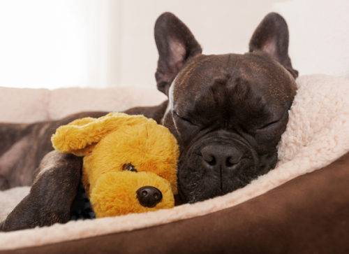 Can Dogs Be Allergic to Their Beds?