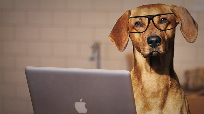 Scientists Inquire: Can Dogs Actually Tell the Difference Between Human Words?