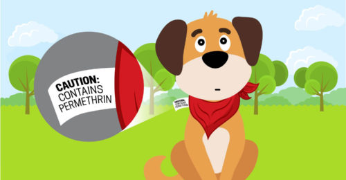 The Dangers Of Permethrin For Dogs: Are Flea Bandanas Safe?