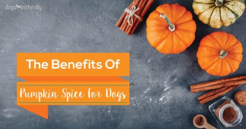 5 Benefits Of Cinnamon and Pumpkin For Dogs