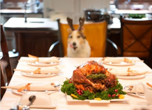 7 Safe and Healthy Human Foods for Dogs That You Can Serve for the Holidays