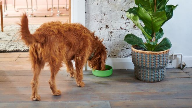 Climate change: Will insect-eating dogs help?