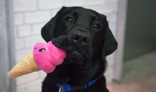 Do dogs love their toys? Scientists study if pets are like children with comfort blankets