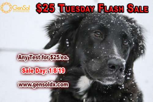 $25 Tuesday Flash Sale!