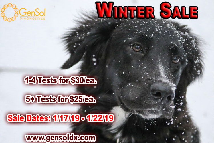 Winter Sale Starts Today!
