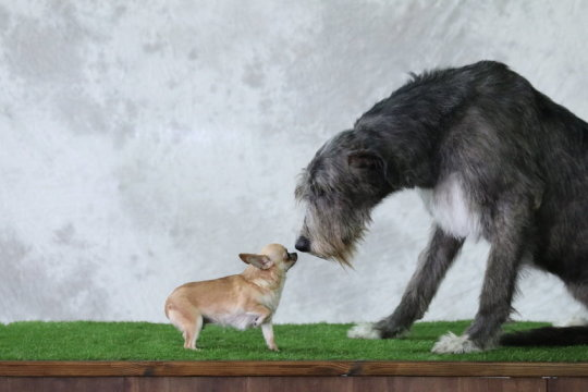 Do bigger brains equal smarter dogs? New study offers answers