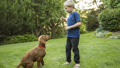 This is the Best Dog Training Technique According to Science